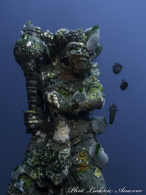 diving-bali-amed
