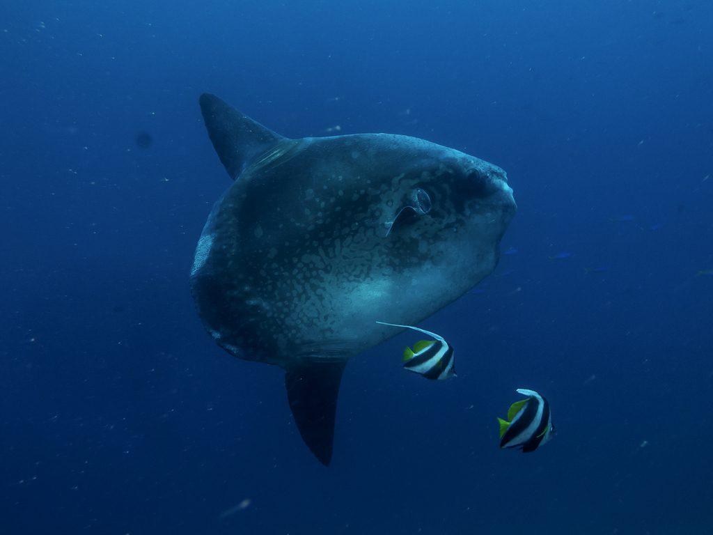 diving-baai-nusa-penida