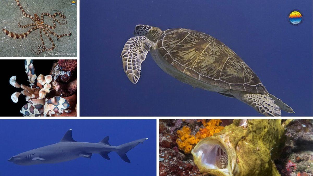 marine-life-bali