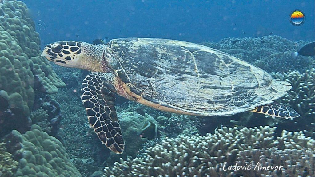 marine-turtles