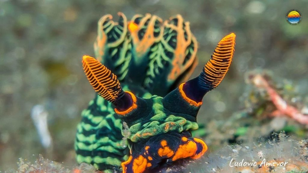 Bali-dive-center