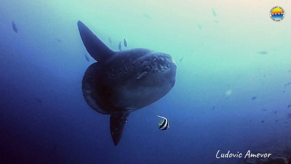 Dive-Bali-Candidasa