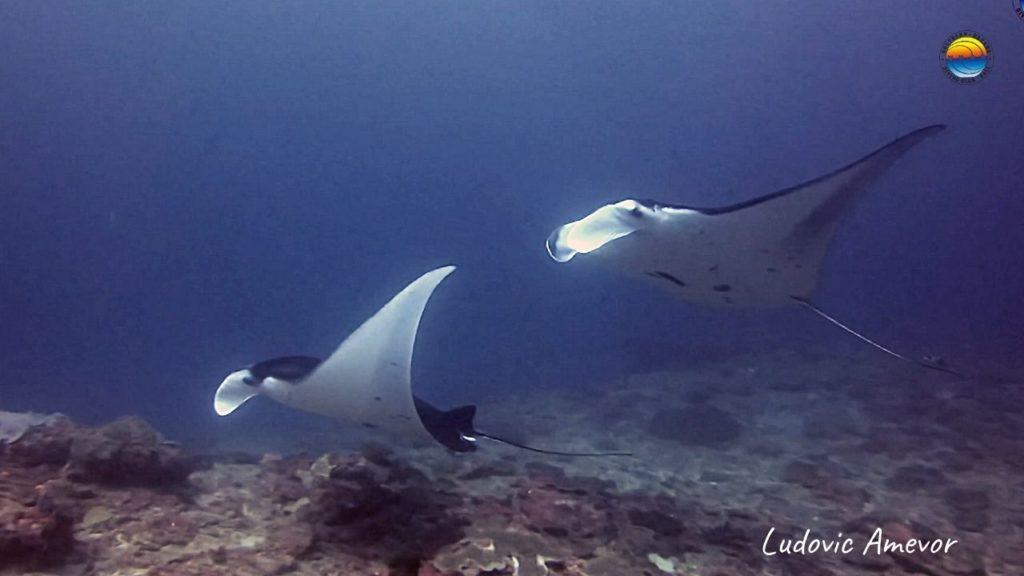 bali-manta-ray