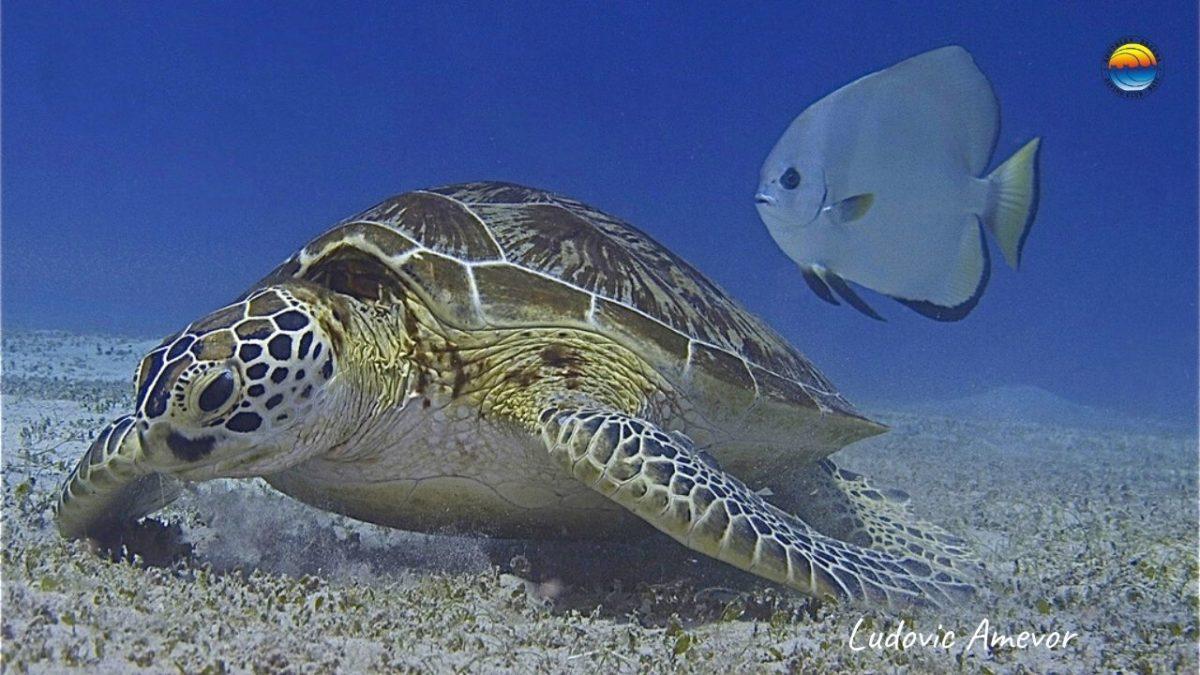 bali-turtles