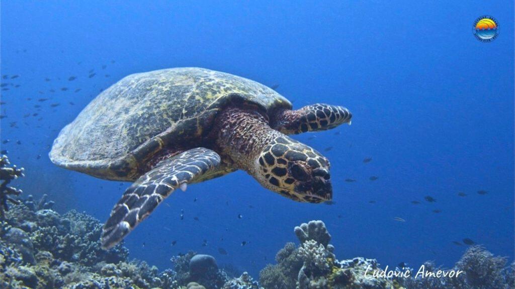 scuba-diving-candidas-bali