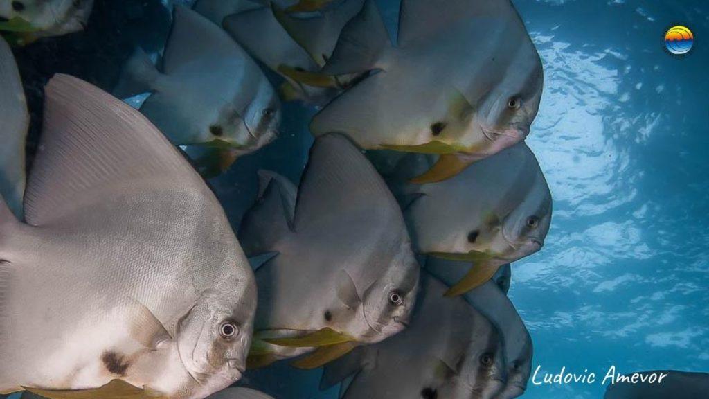 diving-bali-nusa-penida