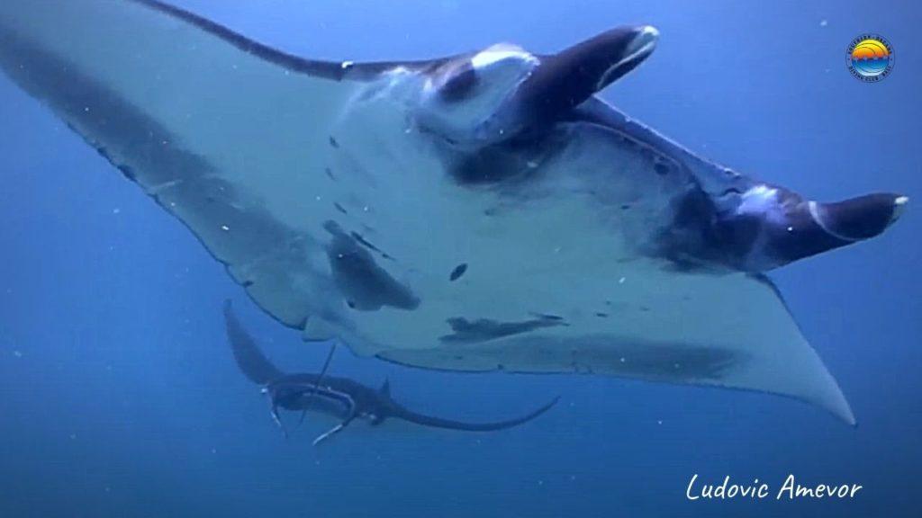 diving-manta-rays-nusa-penida