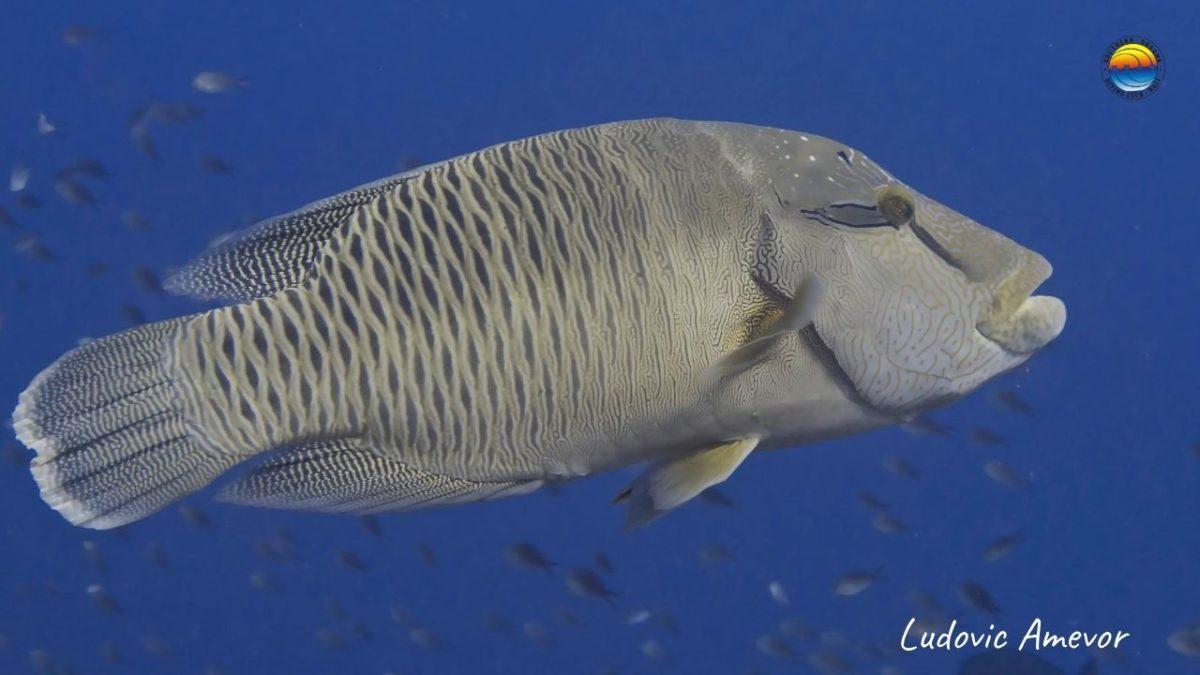 scuba-diving-bali