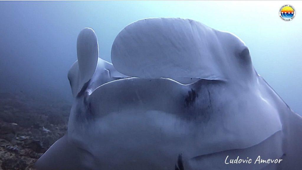 scuba-diving-nusa-penida
