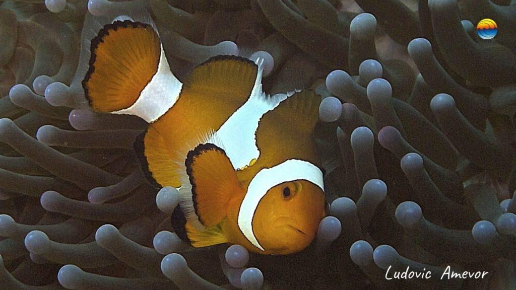 bali-marine-life