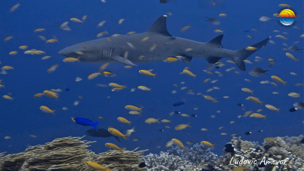 diving-with-sharks