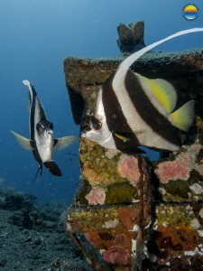 southern-dreams-diving-club-candidasa-bali-08