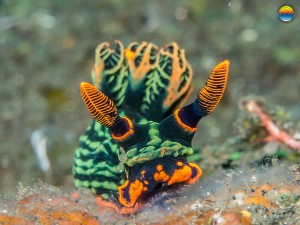 southern-dreams-diving-club-candidasa-bali-42