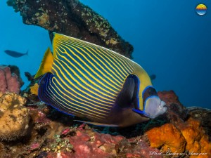 southern-dreams-diving-club-candidasa-bali-54